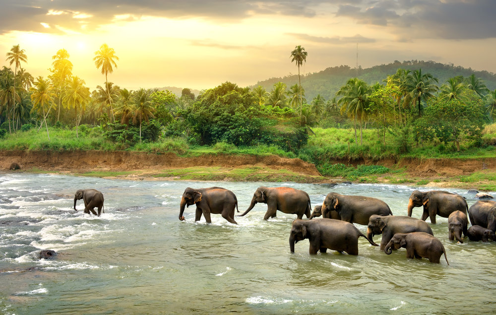 Sri Lanka & Maldives