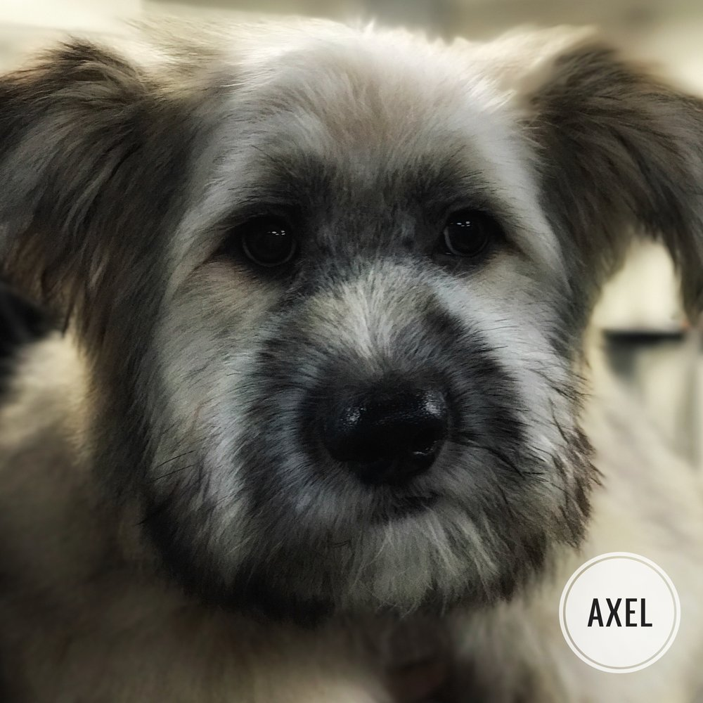 Grooming a Mixed Breed