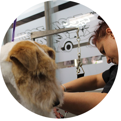 In-Salon-Grooming-Services