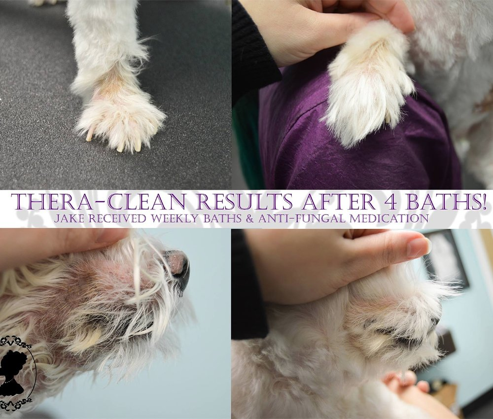 Thera-Clean-Before-And-After-Regina-Zoom-Zoom-Groomers