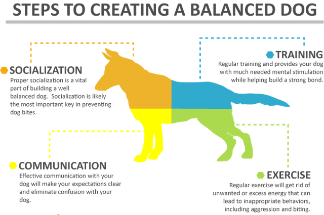 creating-a-balanced-dog2 copy.png