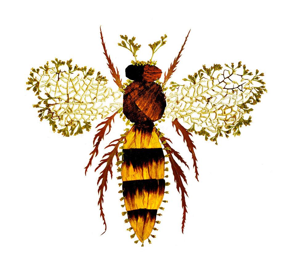 """""""Bee"""" (1 of 3) """"Queen Bee"""", """"Worker Bee"""", """"Honey Bee"""""""