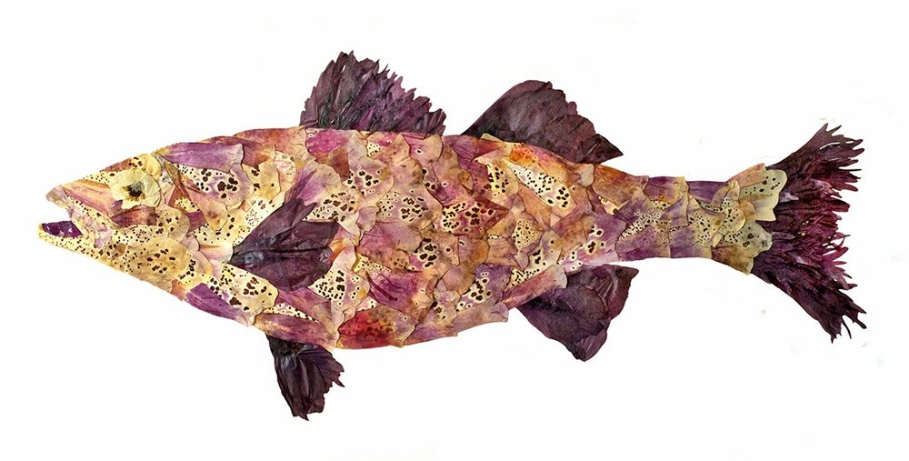 """Purple Fish"""