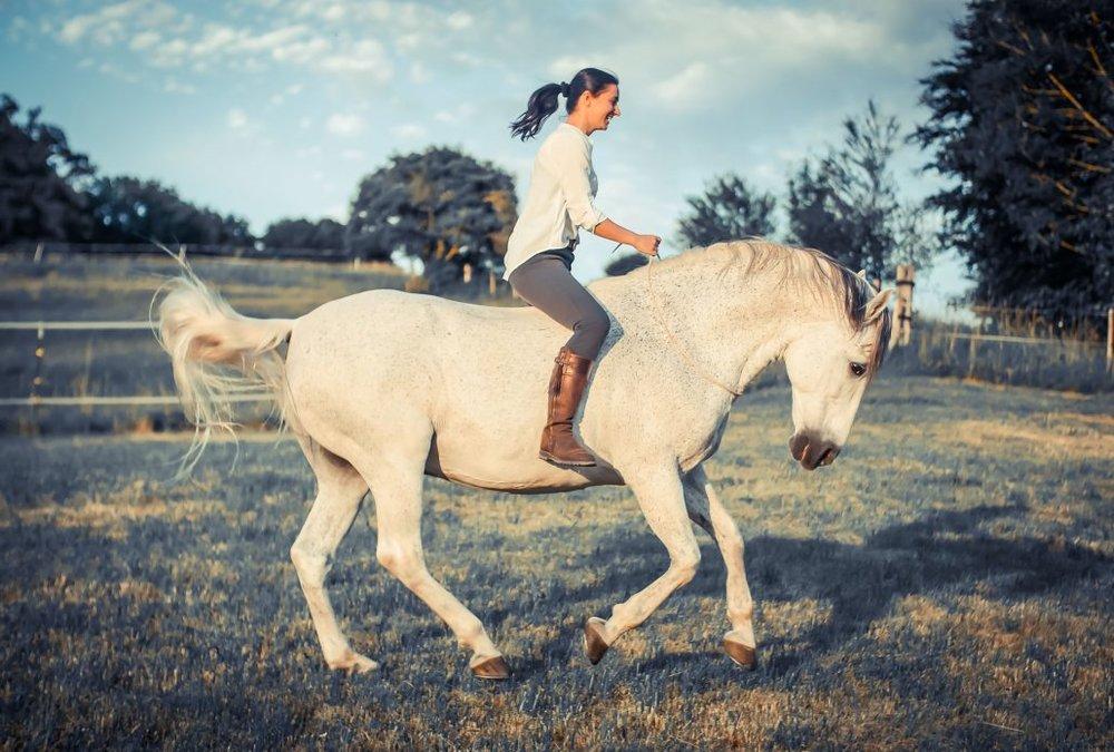 Natural_Horsemanship1030x695.jpg