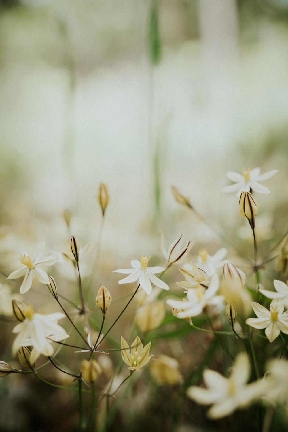 Sierra Nevada Wild Flowers  - Bessie Young Photography 00-9.jpg