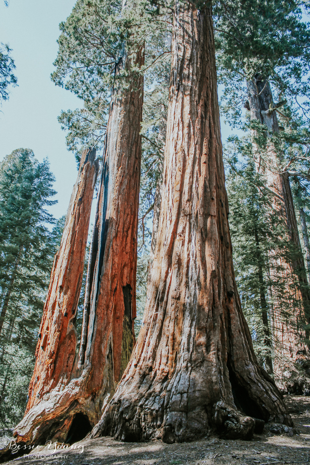 California National Parks List by Adventuring of a Small Town Girl (ASTG) - Sequoia National Park