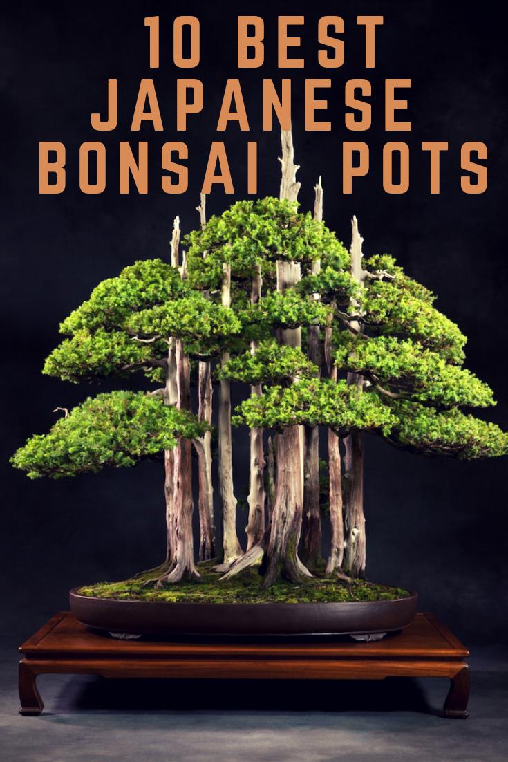 The 10 Best Japanese Bonsai Pots Anime Impulse