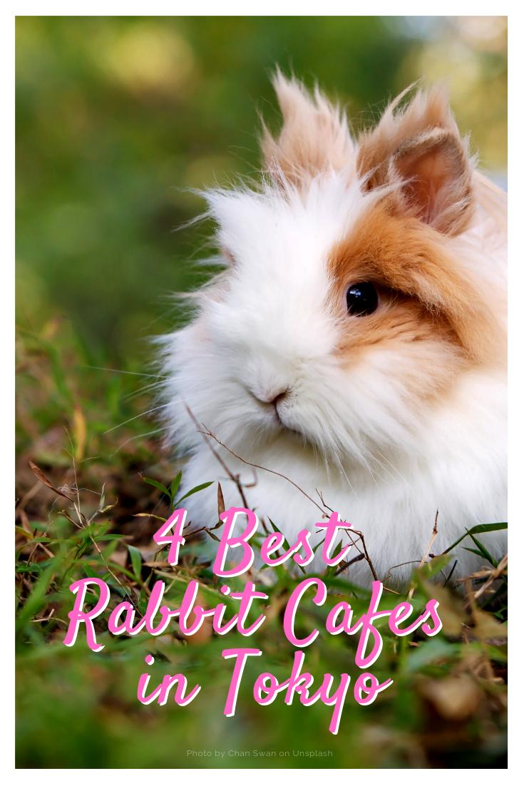 4-best-rabbit-cafes-in-tokyo.png