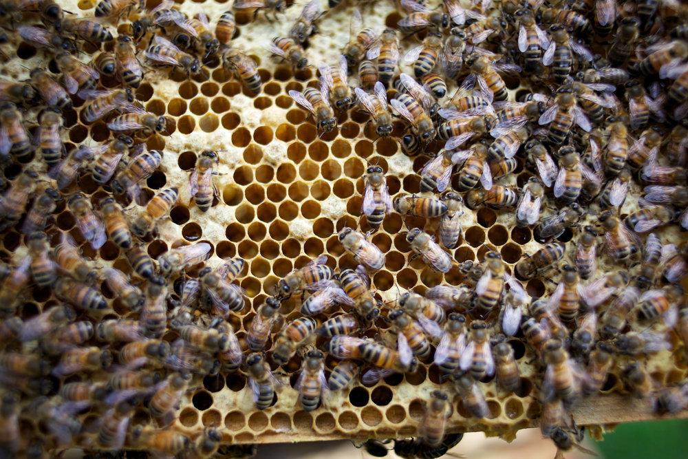 bees-camilla-goddard-katie-hyams-reportage-03.jpg
