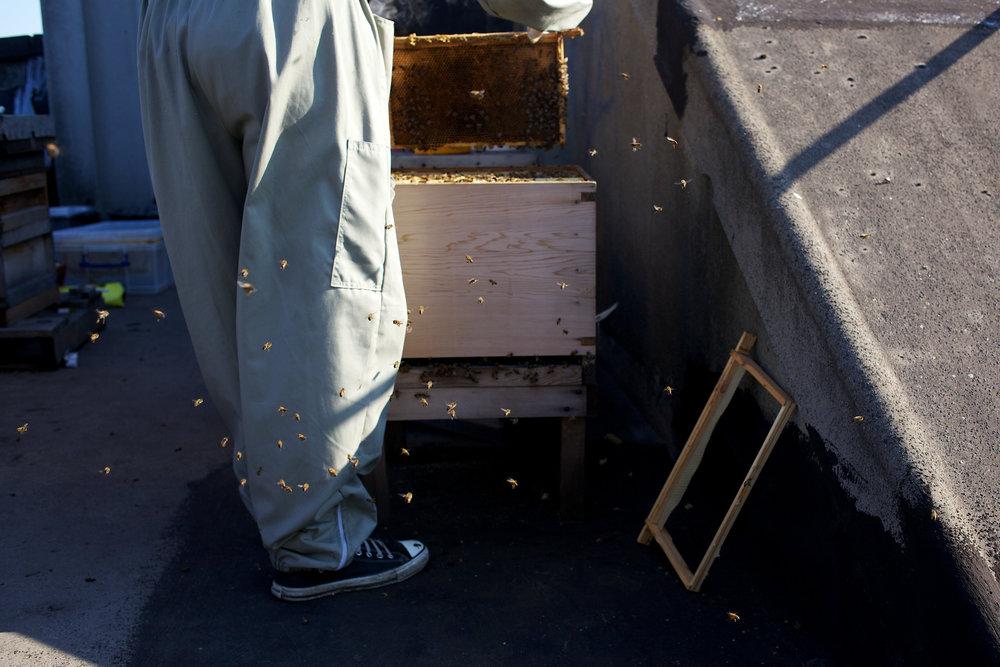 bees-camilla-goddard-katie-hyams-reportage-04.jpg