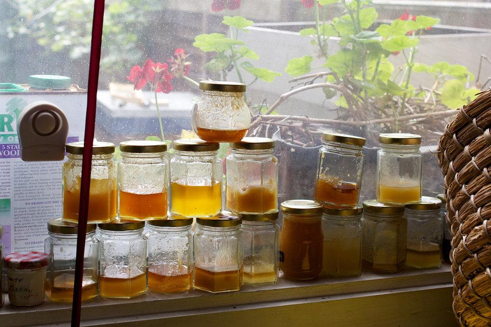 bees-camilla-goddard-katie-hyams-reportage-07.jpg