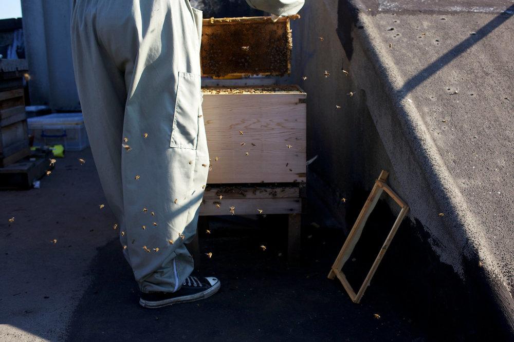 bees-camilla-goddard-katie-hyams-reportage-1.jpg