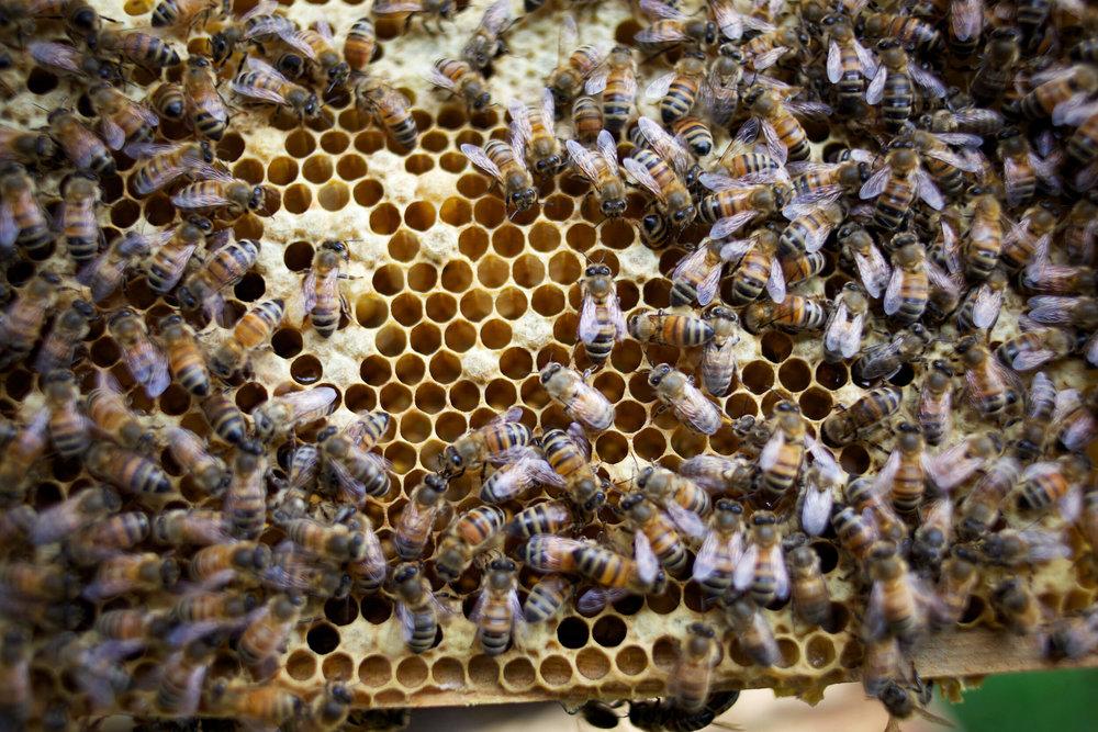 bees-camilla-goddard-katie-hyams-reportage-03_m.jpg