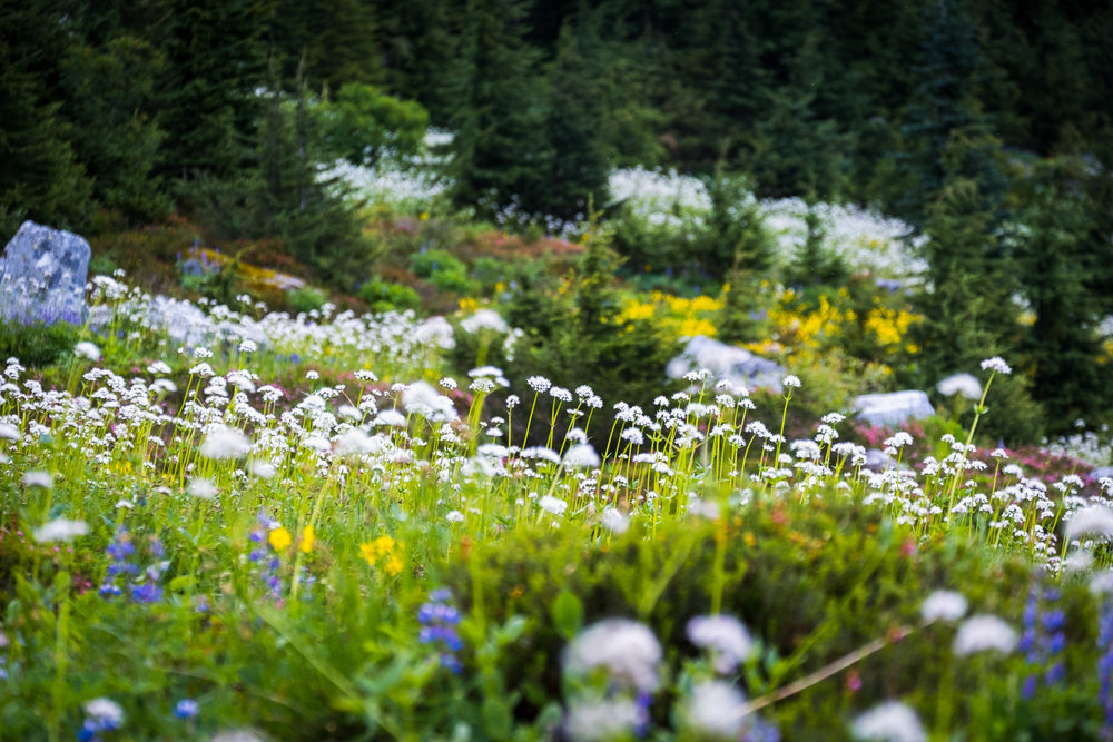 brew-lake-wild-flowers
