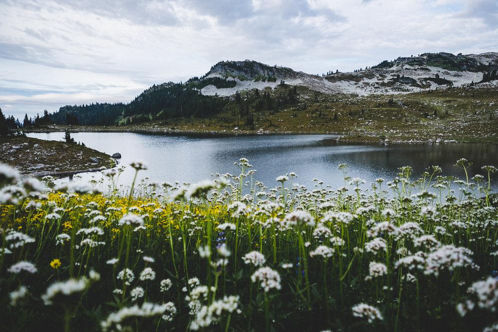 brew-lake