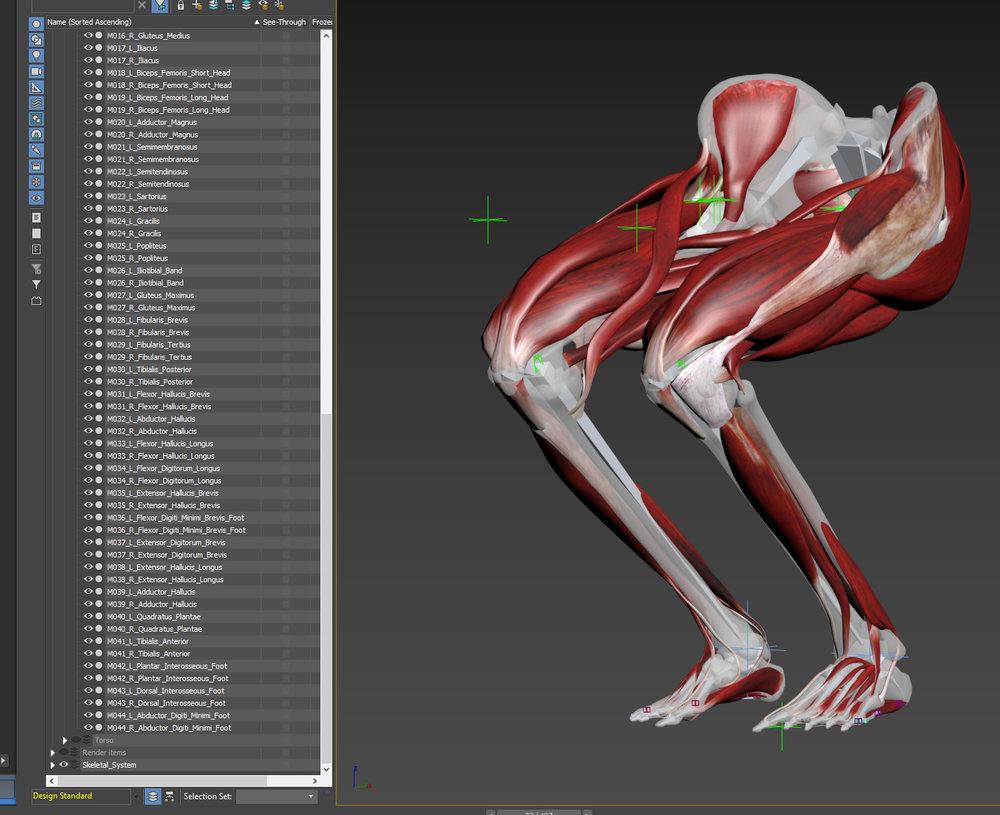 88_Muscles_prv01.jpg