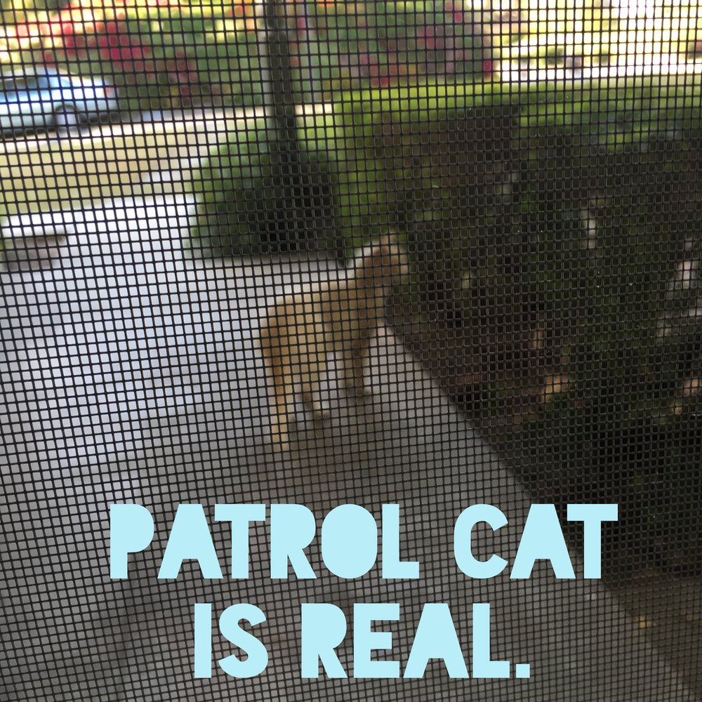 PATROL CAT on  Patreon  for our $5/mo supporters.