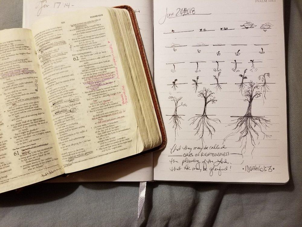 root sketch.jpg