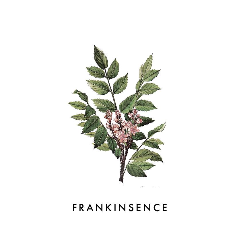 FRANKINSENCE.jpg