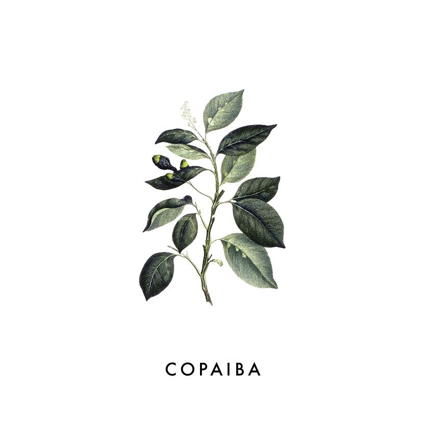 COPAIBA.jpg