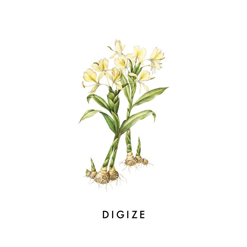 DIGIZE.jpg