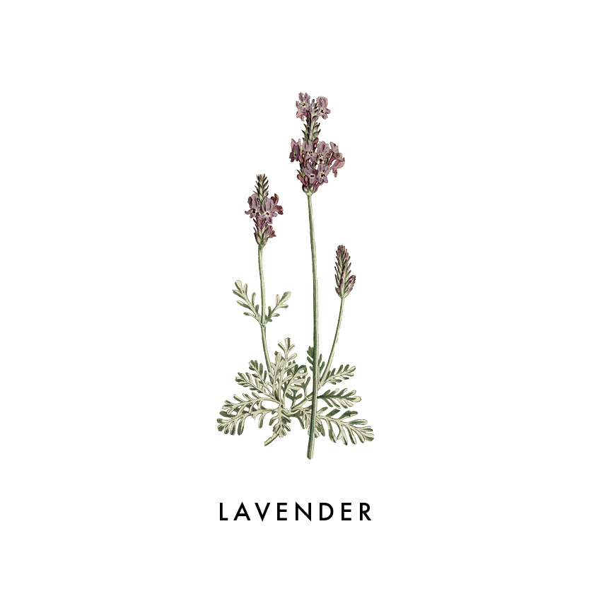 Rule of thumb: when in doubt use lavender. Lavender is a very versatile oil, and most people, when they get started with oils have some experience with lavender. But I immediately noticed a difference. Growing up my mom would always have lavender scented hand soaps and lotions but when I opened my bottle of lavender it was like I was smelling it for the first time.   SLEEP-  One of the first things you'll want to do with your kit is take out the lavender, and add a few drops to your diffuser when you go to bed at night.     RELAXATION-  You might also consider lavender with some epsom salts for a calming bath.    SKIN-  Lavender is also extremely soothing for your skin.    TEA-