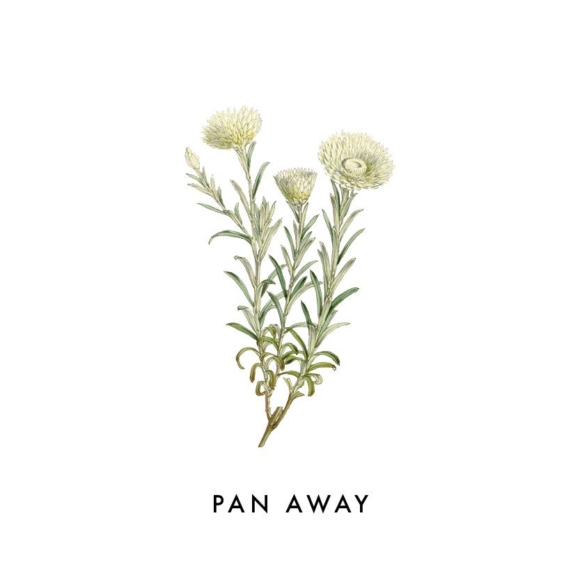 PAN AWAY.jpg