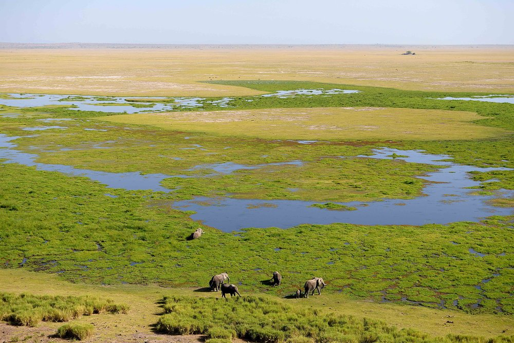 View of the Marsh from Obsrervation Hill -  Amboseli Serena.jpg