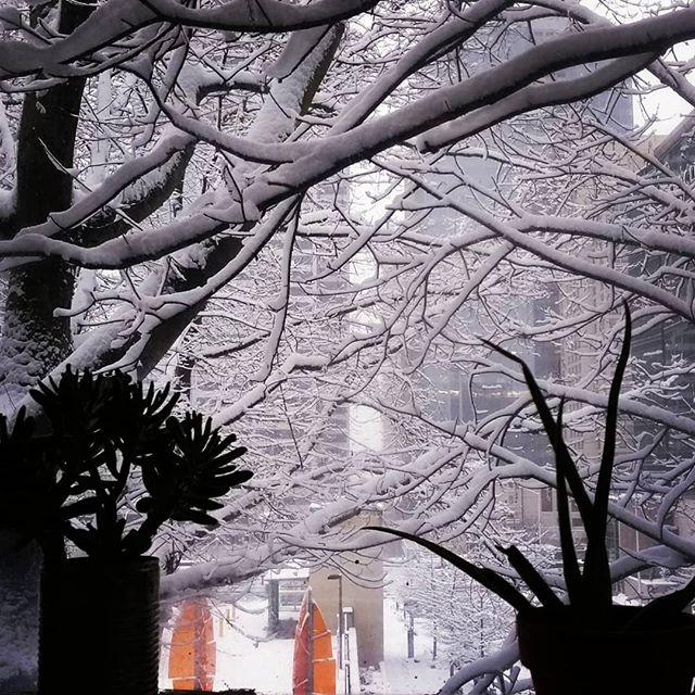 #seattle #snowmageddon #winterstormmaya