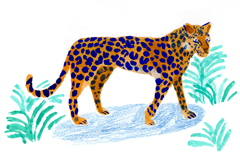 leopard_tour.jpg
