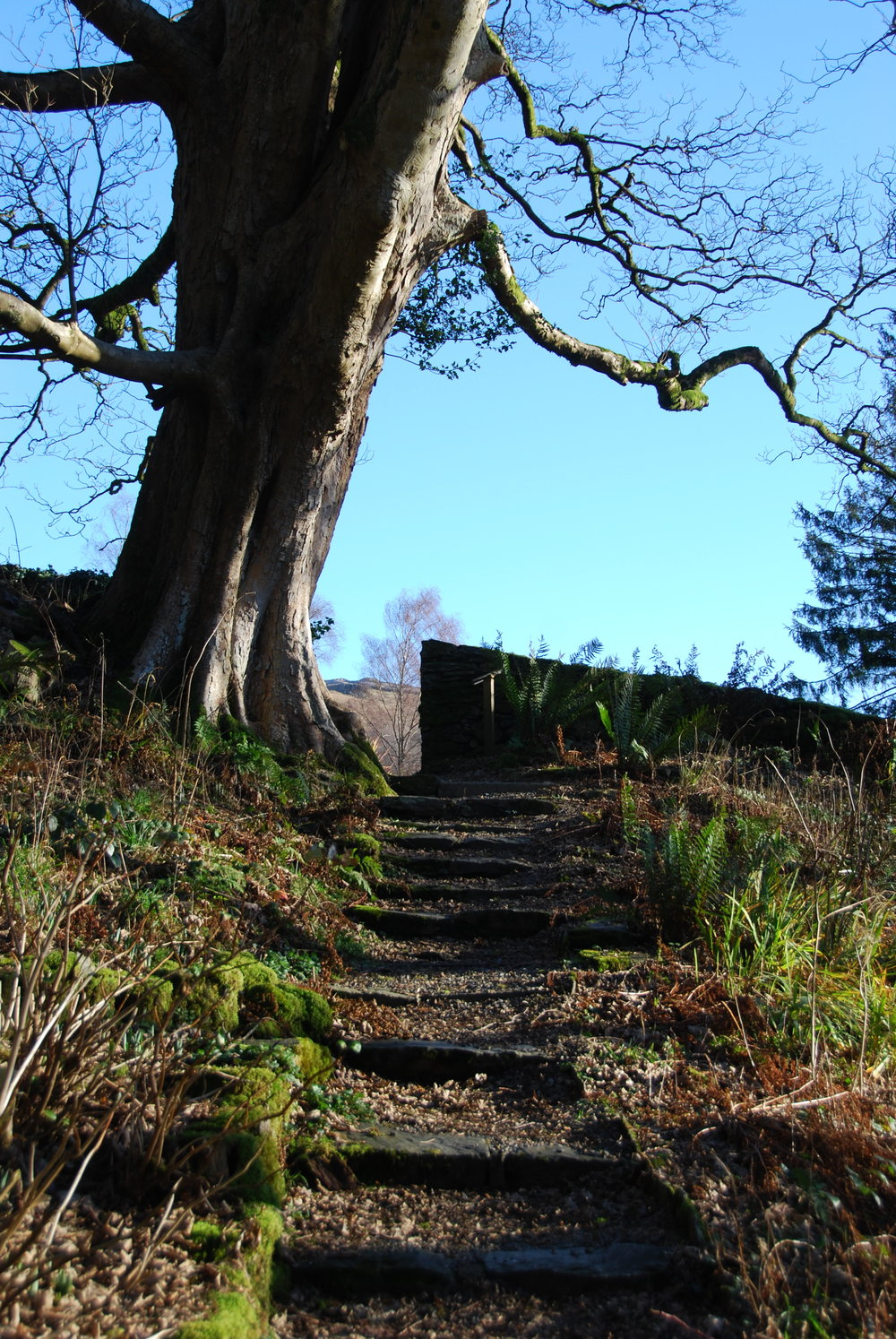 rydal-mount-abbey-art-steps.jpg