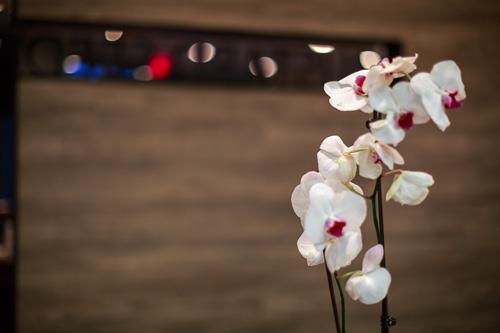 APT_8005_Flower_500pxW.jpg