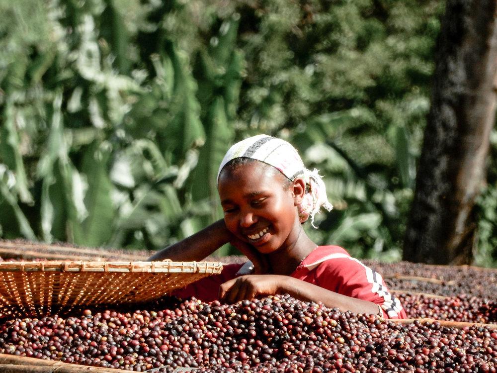 Coffeefarm6.jpg
