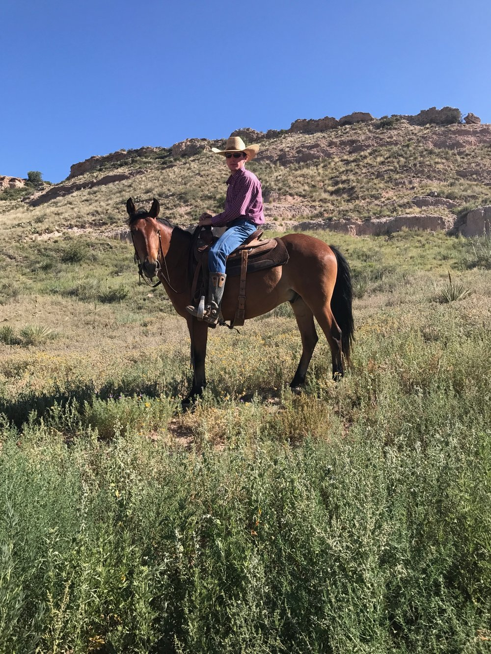- Age: 4          Breed: QH/ponyColor: BayGender: GeldingHeight:  13 HandsTemperament: 1Ground Manners: 2Farrier/Vet: 2Rider Experience: ExperiencedRiding Limitations: NoneFEE: $ 550