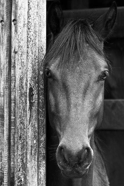 horse1.jpeg