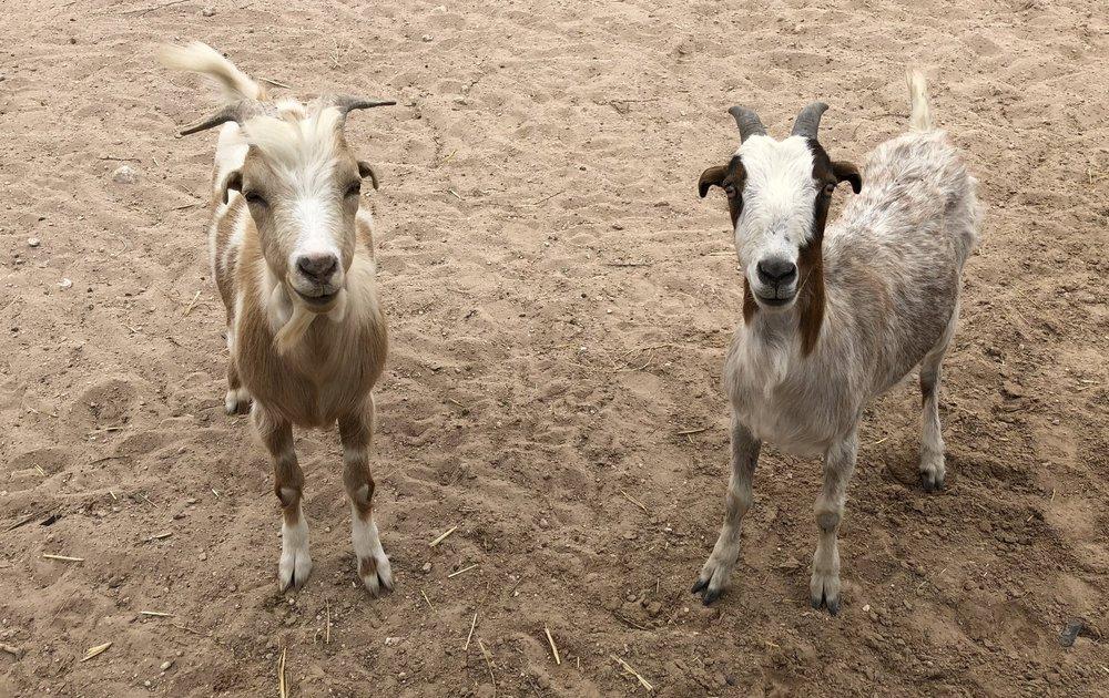 RAMBO & ROSIE