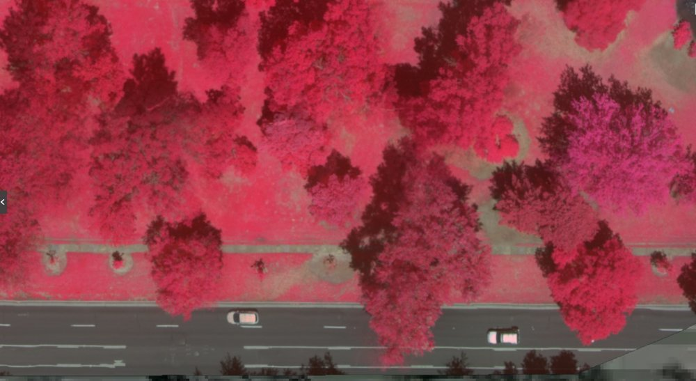 Infrared image of urban parkland