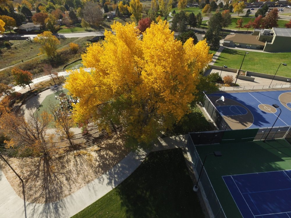 The art and science of urban forestry - Arbor Drone is on the cutting edge