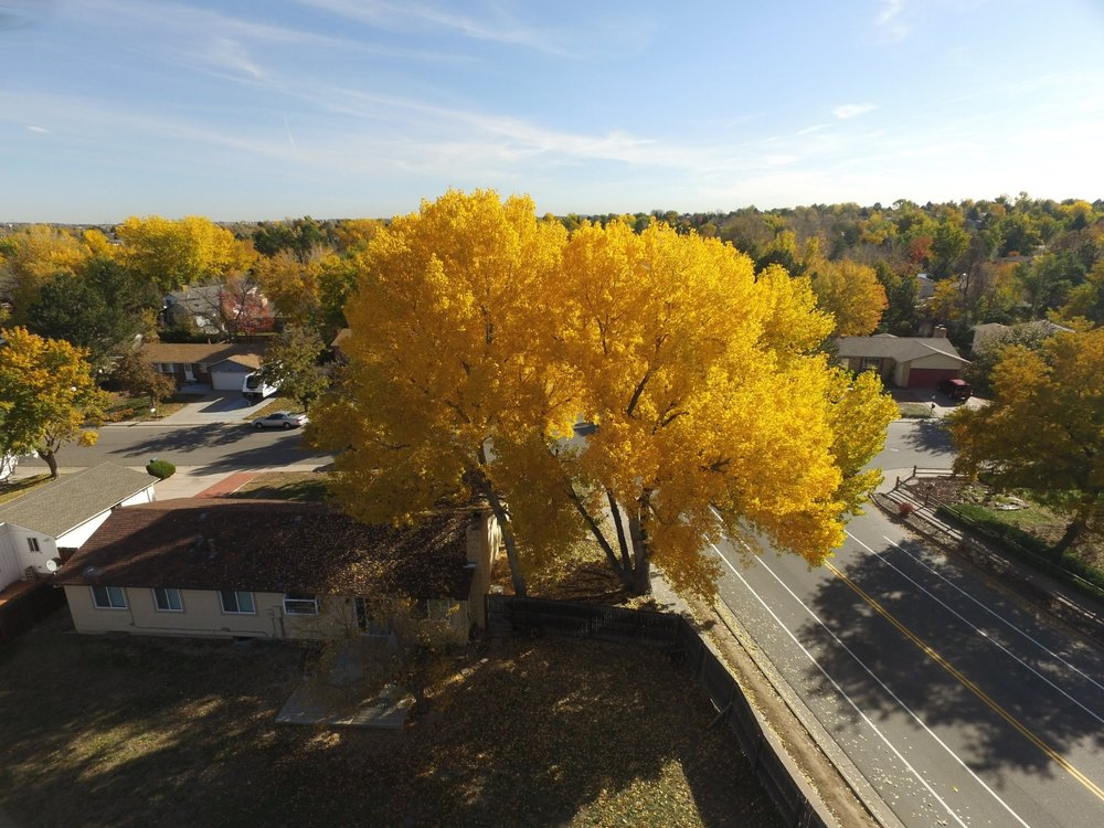 arborist urban forest imagery from above drone image
