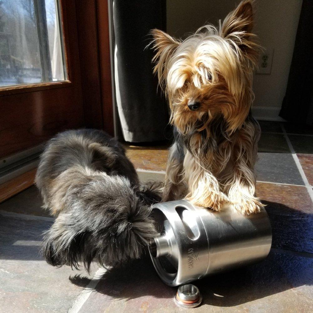 Names: Gracie and Stella, Human: Kevin Lehman