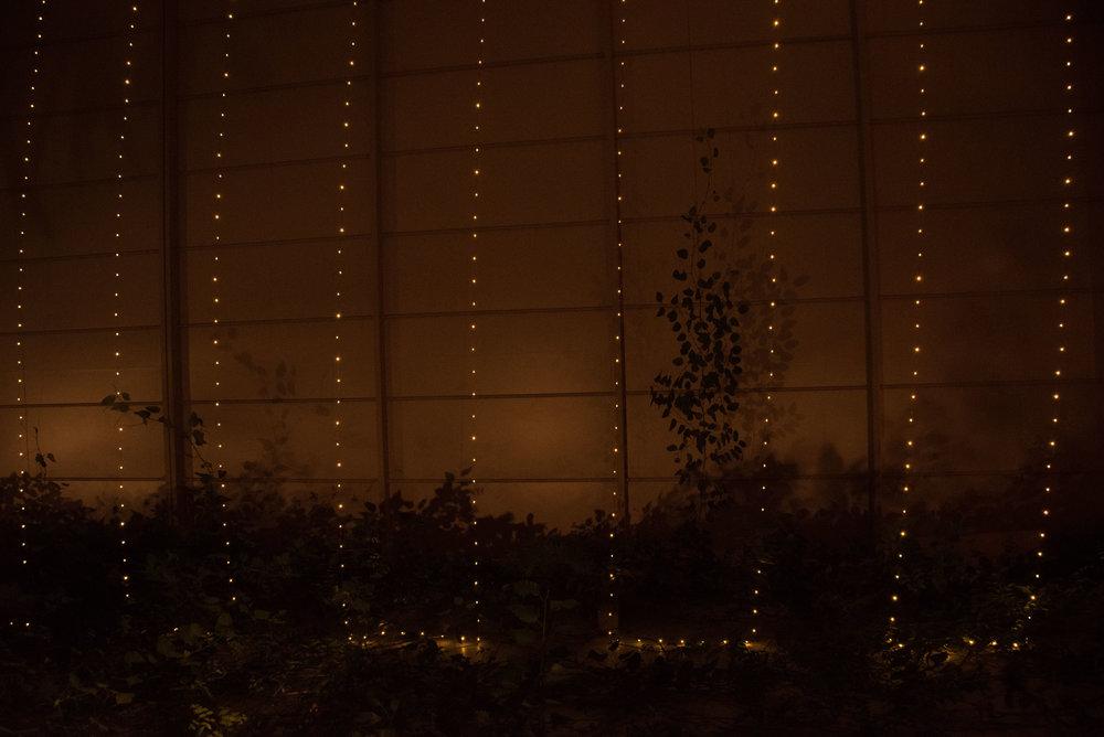 Night Roof Garden-2366.jpg