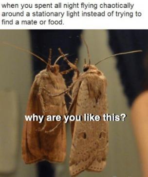 moth meme.png