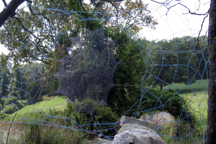 Violet Moon Web