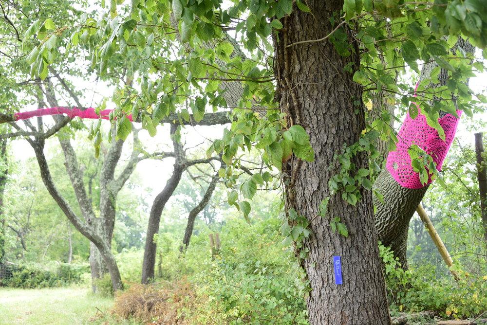 Peekaboo Pink Yarn
