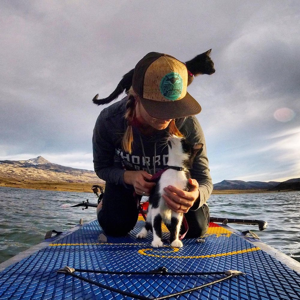 San Juan SUP Co. kittens, Dolores and Miguel, love stand up paddle boarding at Miramonte Reservoir on the Hala Radito!  [Ph: Nola Svoboda]