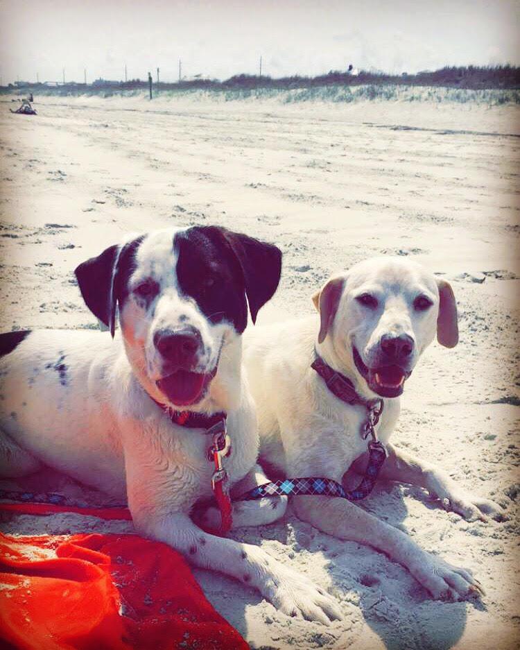 beachdog2.jpg