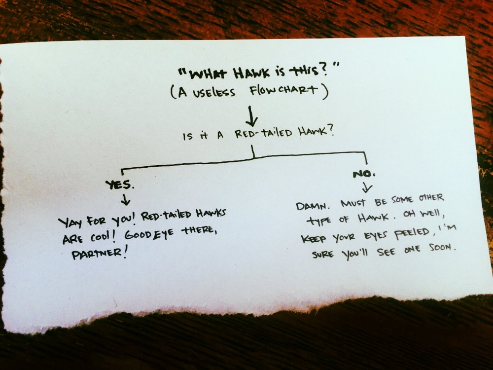 A very academic flowchart for hawk identification