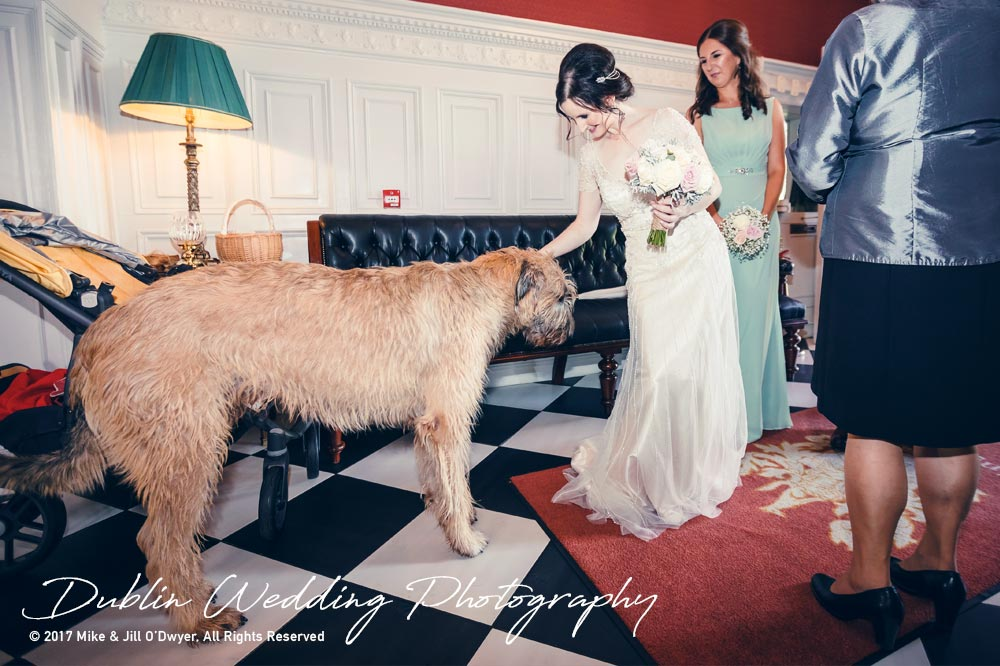 Bellingham Castle, Wedding Photographer, Louth, Dublin, Bride & Wolfhound