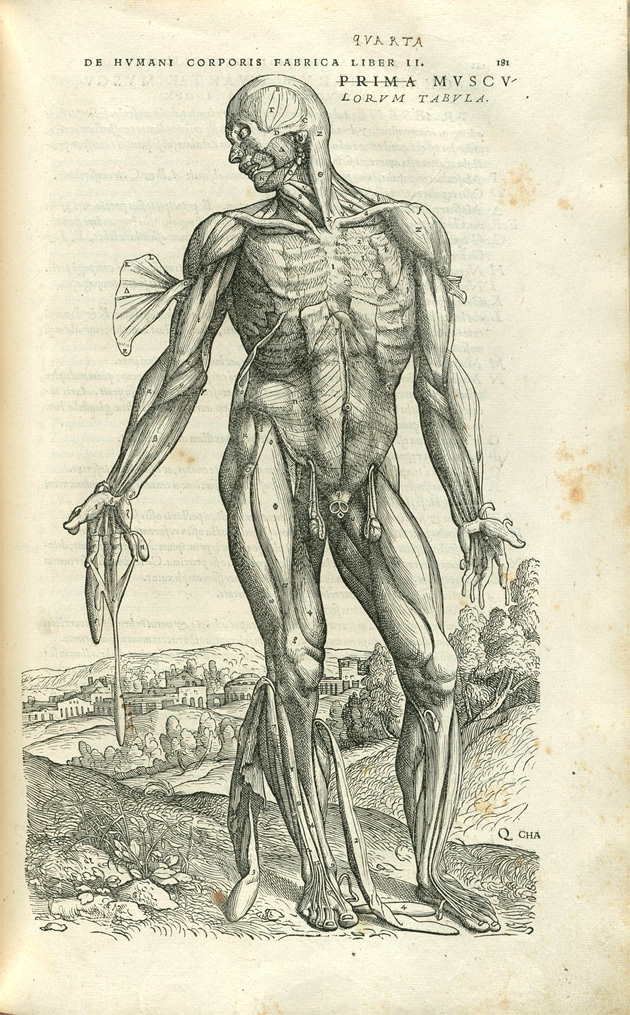 Vesalius from  British Museum