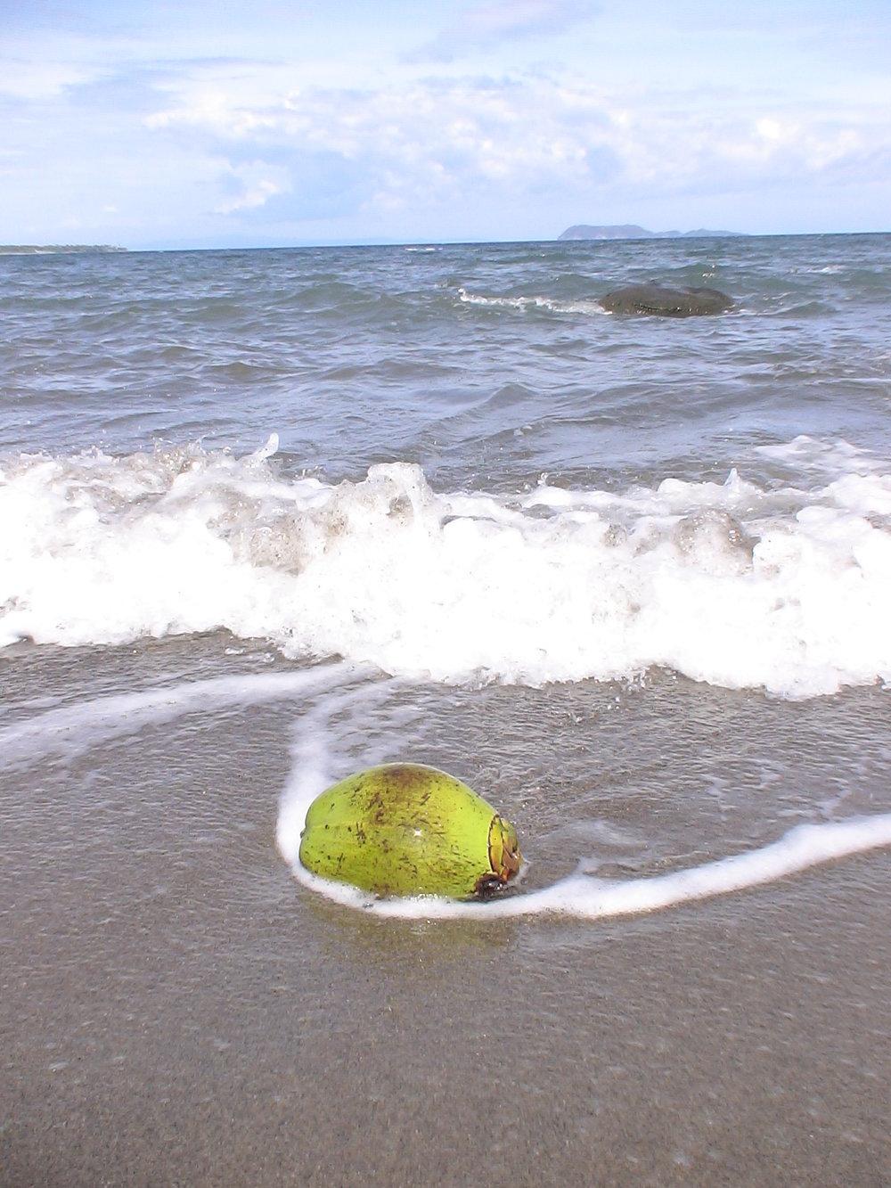 stock-photo-coconut-131032163.jpg